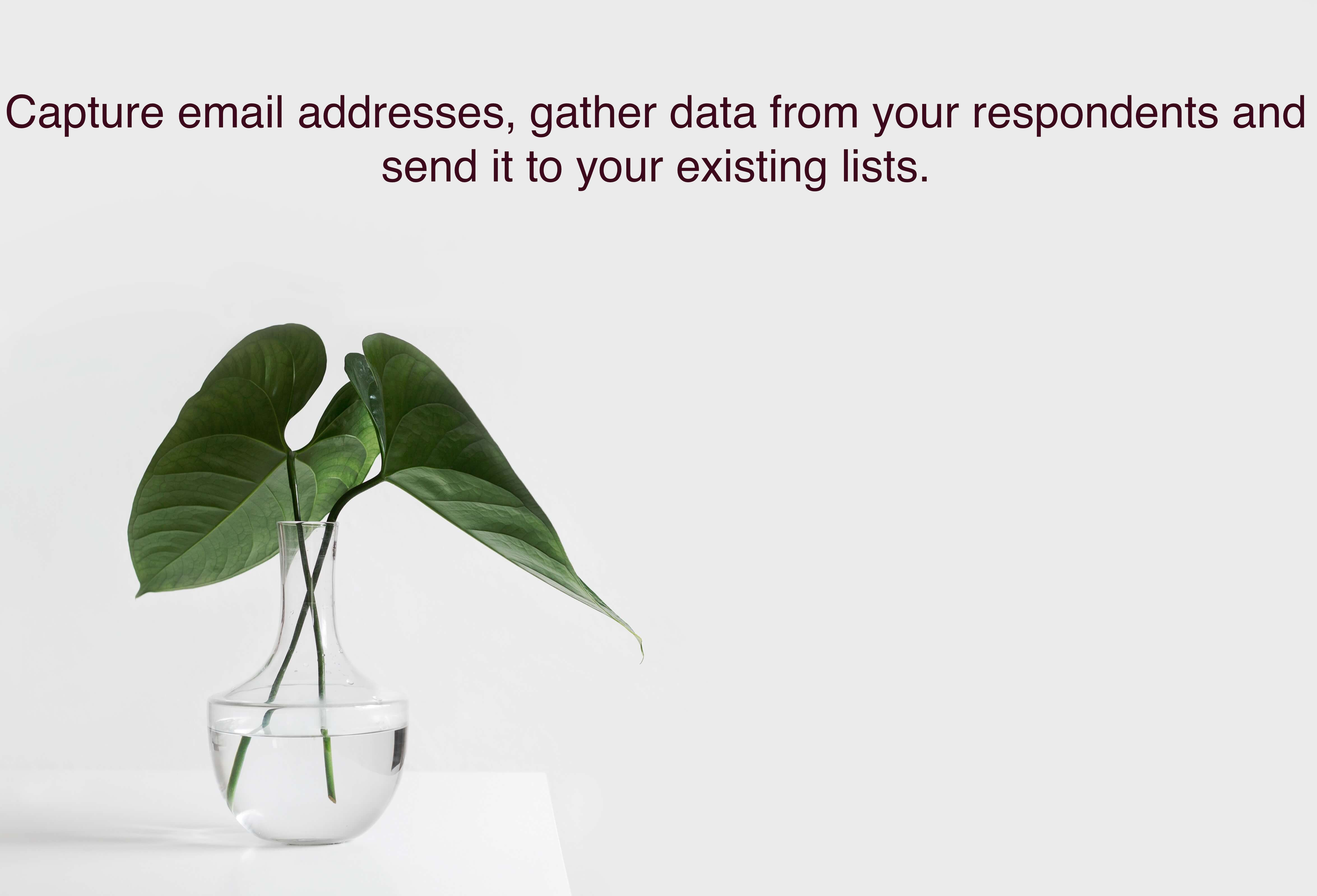 Riddle's Quiz Maker lets you capture email addresses and with its help, you can gather data from your respondents and send it to your existing lists via tools like MailChimp.