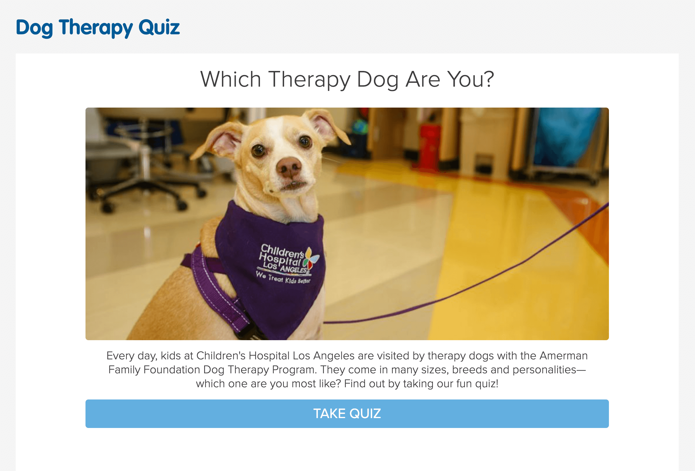 dog therapy quiz example